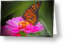 The Monarch's Flower Greeting Card