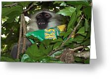 the Monkey thief Greeting Card