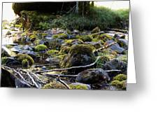 The Moss In The River Stones Greeting Card