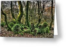 The Mossy Creatures Of The  Old Beech Forest 1 Greeting Card