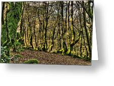The Mossy Creatures Of The  Old Beech Forest 4 Greeting Card