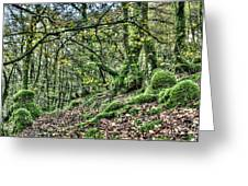 The Mossy Creatures Of The  Old Beech Forest 5 Greeting Card