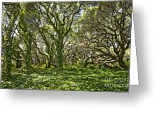 The Mysterious Forest - The Magical Trees Of The Los Osos Oak Reserve. Greeting Card