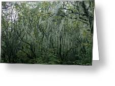 The Mystery Forest. Greeting Card