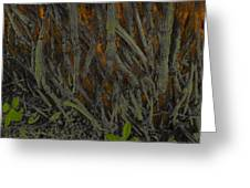 The Mystery Of Surface Roots Greeting Card