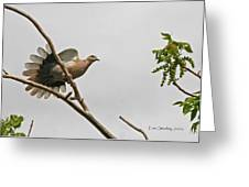 The New Dove In Town Greeting Card