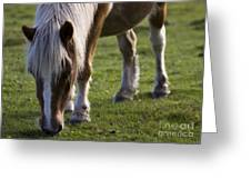 The New Forest Pony Greeting Card