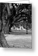 The Oaks Of Audubon Park Greeting Card