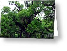 The Oaks Greeting Card