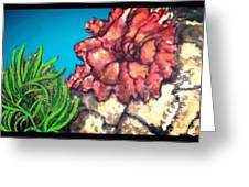 The Odd Couple Two Very Different Sea Anemones Cohabitat Greeting Card