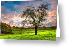 The Old Apple Tree At Dawn Greeting Card