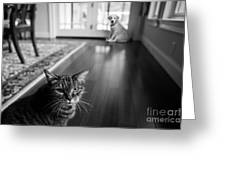 The Old Cat And The New Puppy Greeting Card
