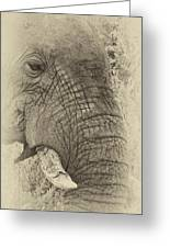 The Old Elephant Bull Greeting Card