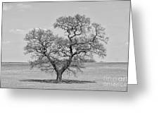 The Old Oak - Mono Greeting Card
