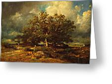 The Old Oak Greeting Card