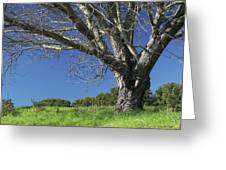The Old Oak Tree Greeting Card