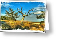 The Old Tree Greeting Card