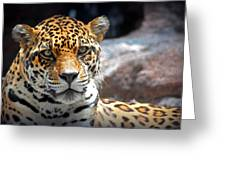 The Ole Leopard Don't Change His Spots Greeting Card