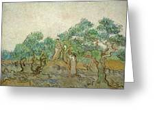 The Olive Orchard Greeting Card