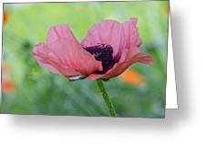 The One And Only Pink Poppy Greeting Card