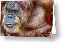 The Orangutan Album  Greeting Card