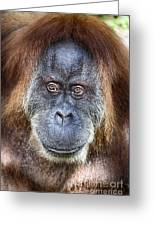 The Orangutan Album V4 Greeting Card