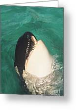 The Original Shamu Orca Whale At Sea World San Diego California 1967 Greeting Card
