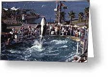 The Original Shamu Orca Sea World San Diego 1967 Greeting Card