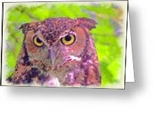 The Owl... Greeting Card