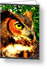 The Owl's Eye Greeting Card