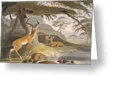 The Pallah, 1804-05 Greeting Card