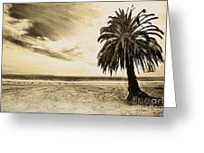 The Palm Swayed As The Storm On The Ocean Blew In Greeting Card by Artist and Photographer Laura Wrede