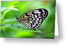 The Paper Kite Or Rice Paper Or Large Tree Nymph Butterfly Also Known As Idea Leuconoe 2 Greeting Card