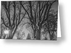 The Park In Black And White Greeting Card
