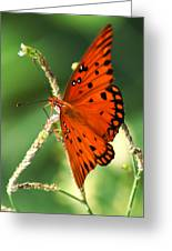 The Passion Butterfly Greeting Card