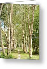 The Path Between The Trees Greeting Card