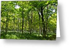 The Peaceful Forest  Greeting Card