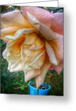 The Peach Rose Greeting Card