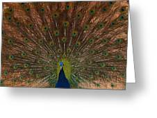 The Peacock 2 Greeting Card
