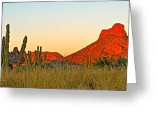 The Peak And Cardon Cacti In The Sunset In San Carlos-sonora Greeting Card