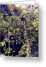 The Pear Tree Greeting Card