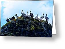 The Pelican Dance Greeting Card