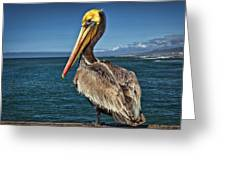 The Pelican Of Oceanside Pier Greeting Card