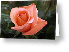 The Perfect Coral Rose Greeting Card