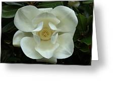 The Perfect Magnolia Bloom Greeting Card