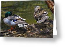 The Perfect Mallard Couple Greeting Card