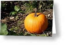 The Perfect Pumpkin In The Patch Greeting Card
