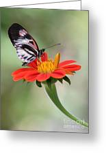 The Piano Key Butterfly Greeting Card