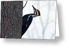 The Pilleated Woodpecker Greeting Card by Rhonda Humphreys