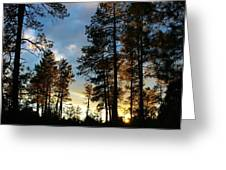 The Pines At Sunset Greeting Card